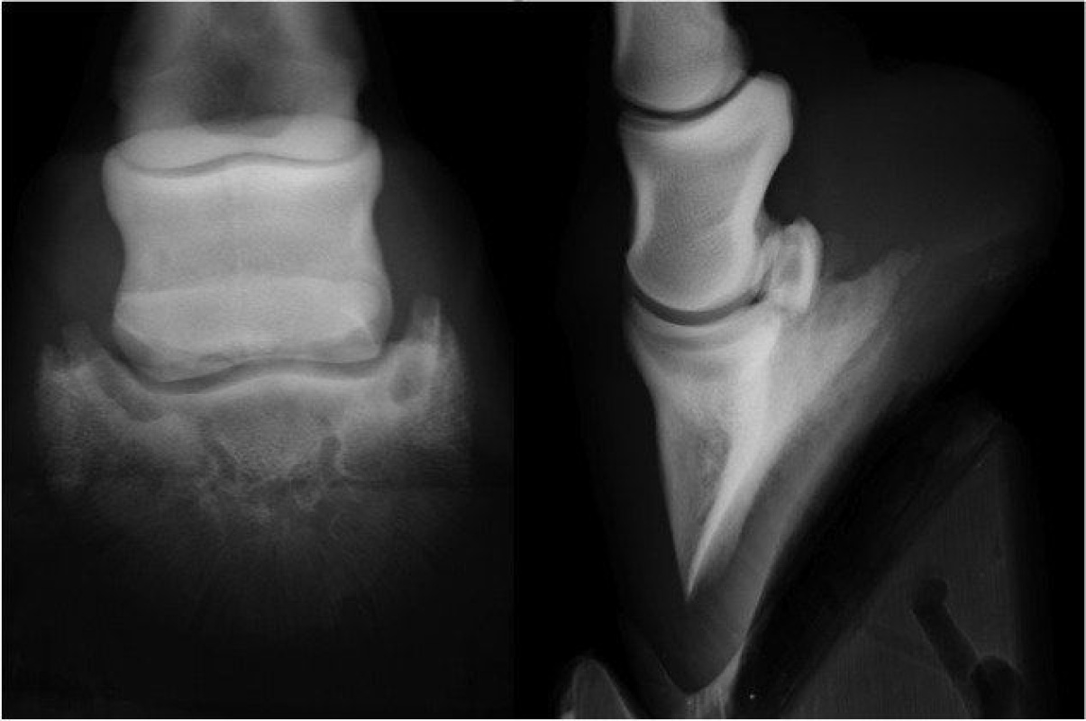 Case A case of osteochondral fragmentation of the navicular bone in a horse